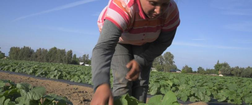 Undocumented Farm Worker Enedina Bibanco